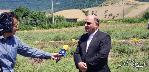35 هکتار از اراضی کشاورزی شهرستان آزادشهر زیر کشت گیاه گل گاوزبان رفته است