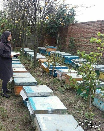 سرشماری سالانه زنبورستان های شهرستان آزادشهر
