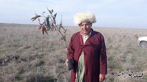 نهالکاری توسط قوم ترکمن