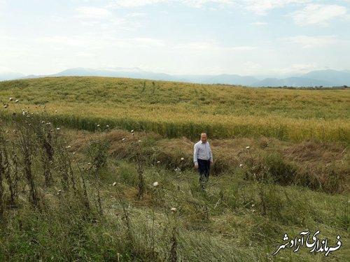 بازدید سرپرست یگان حفاظت میراث فرهنگی شهرستان آزادشهر از تپه تاریخی سرهنگ روستای عطابهلکه