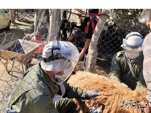 اجرای طرح واکسیناسیون رایگان بیماری آبله و شاربن در شهرستان آزادشهر