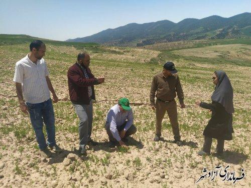 شهرستان آزادشهر، قطب کشت عدس و سایر حبوبات در استان است